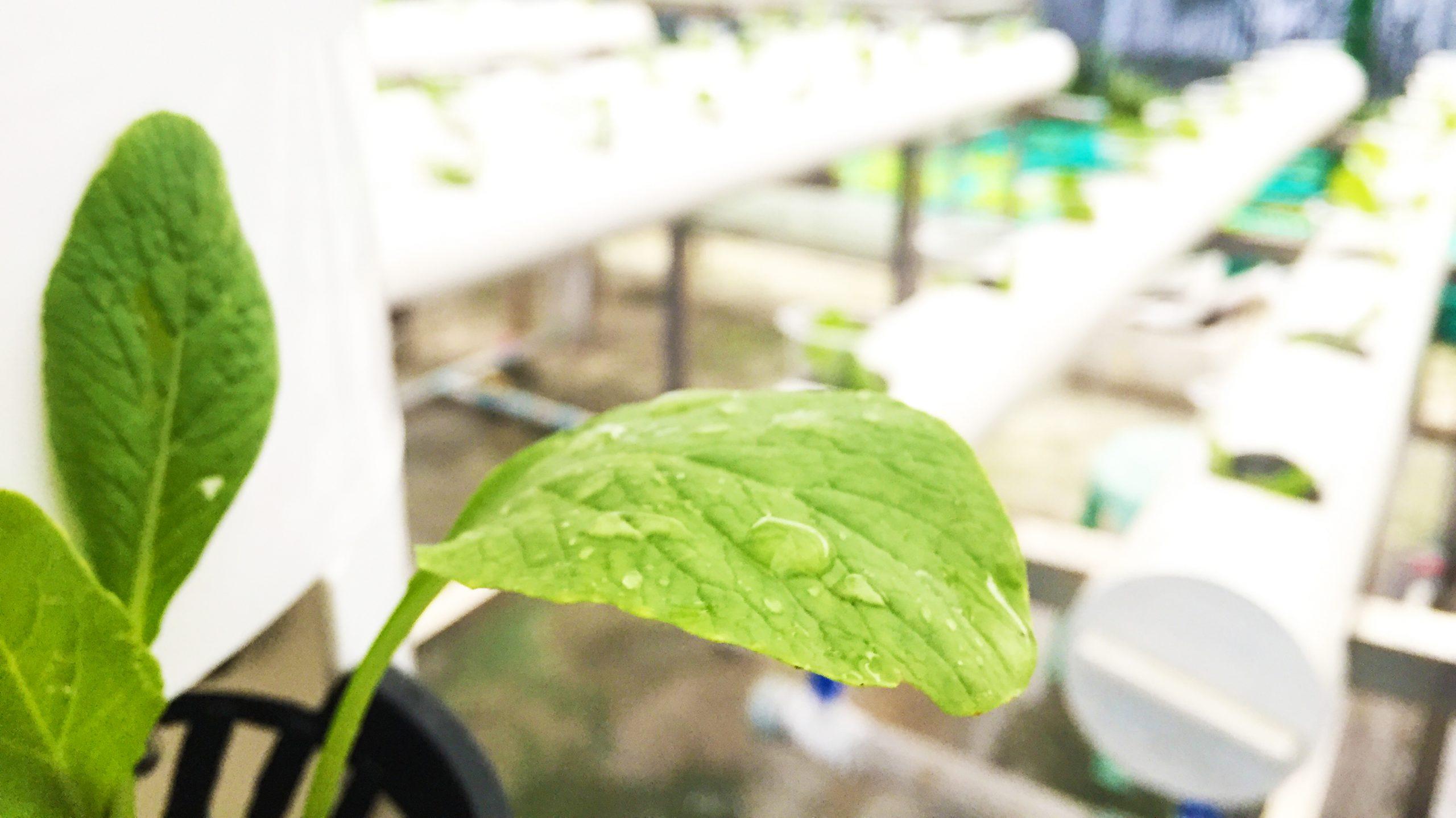 Insys Smart Garden